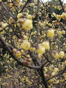 Blühten im Frühjahr