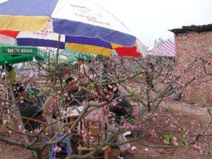 Peach flower festival