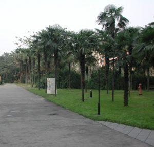 Palmen-Weg
